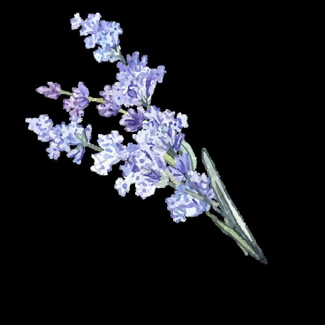 #macaron #paris #cake #sweet #макарун #париж #сладости #десерт #violet #parfume #dior #духи #woman #девушка #flower #велосипед #bike #travel #lavande #лаванда