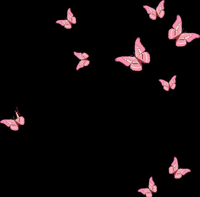 #pink #pinkaesthetic #butterfly #butterflies