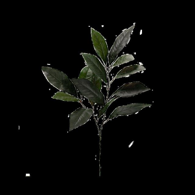 #plants #flower #green #aesthetic #flowergreen #aestheticgreen #freetoedit