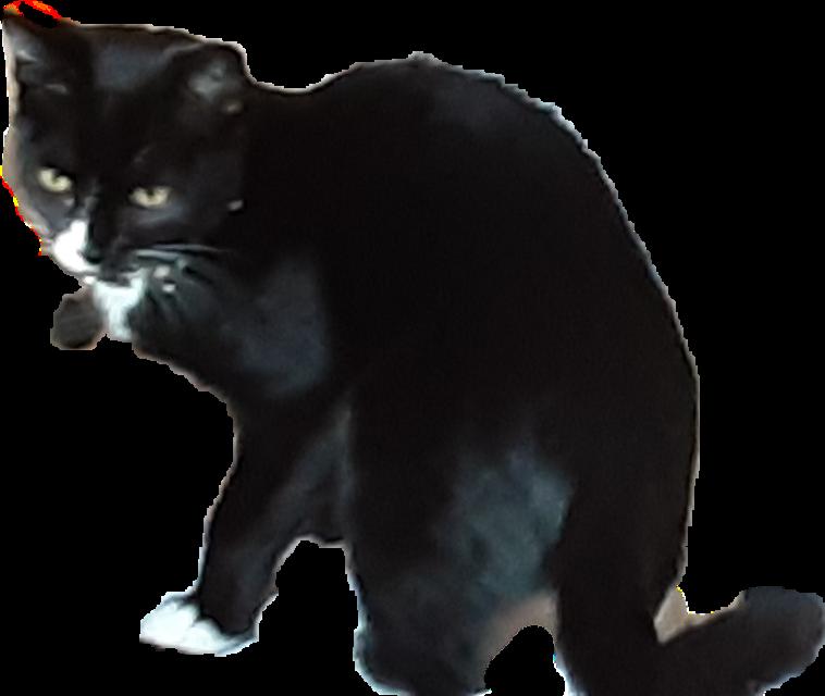 #cat #lunacat #mycat