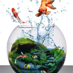 freetoedit fish fishes myedit water