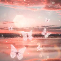 freetoedit pinkbutterflies pinksunset srcpinkbutterflies createfromhome stayinspired