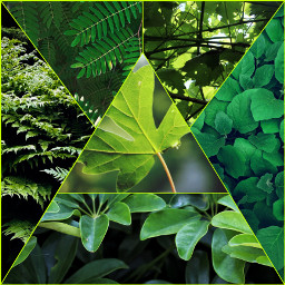 freetoedit green greenaesthetic greenleaves ccgreenaesthetic createfromhome stayinspired