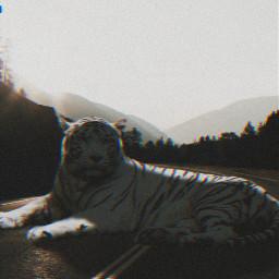 freetoedit lion edit black dark ecgiantanimals giantanimals createfromhome stayinspired