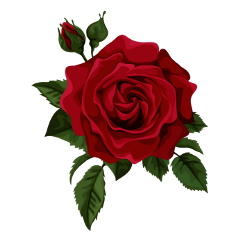 freetoedit rose paintedrose oilpainting redrose