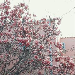 freetoedit flowerpower flowerphotography fiori l4like