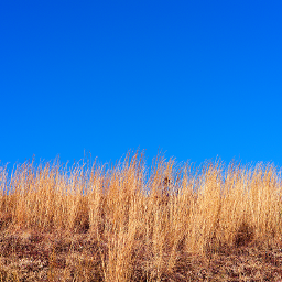 freetoedit outdoorphotography lookup clearbluesky hilltop