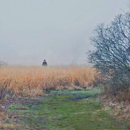 freetoedit naturephotograpy foggyday walkingalone