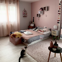 bedroom pink cat babycat sweetdreams homesanctuary createfromhome stayinspired pchomesanctuary