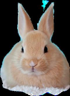rabbit freetoedit