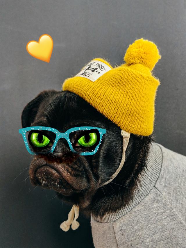 #freetoedit #cute #dog
