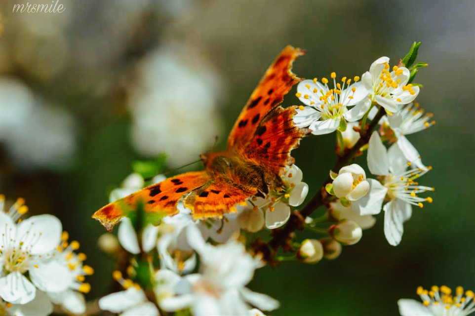 #freetoedit #photography #nature #butterfly #spring