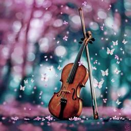 freetoedit violin butterfly pink pinkflower srcpinkbutterflies