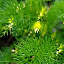 freetoedit naturephotography myshot green