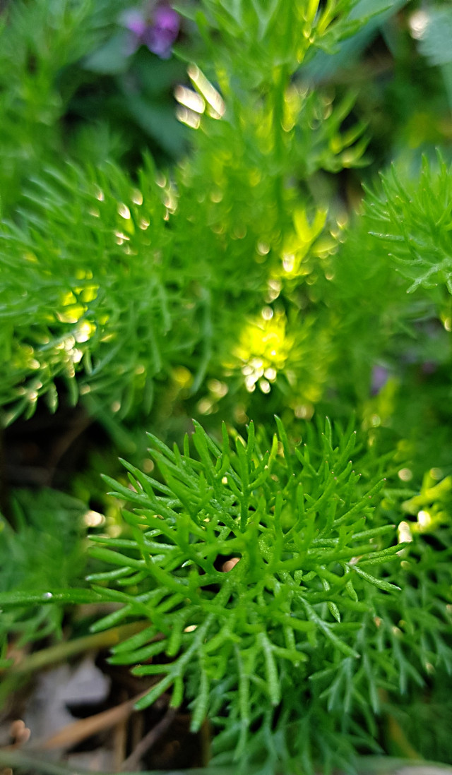 #freetoedit#naturephotography#myshot#green