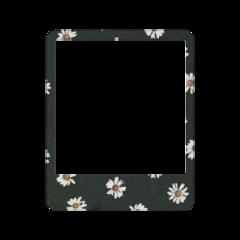 frame frames polaroid flower flowers freetoedit