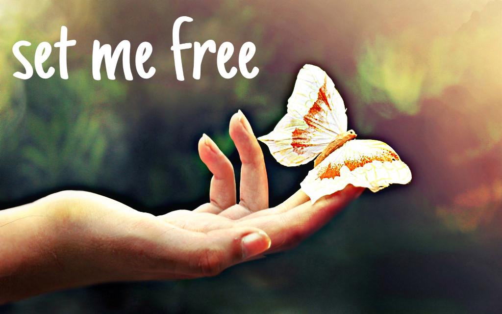 #myedit #myphoto #myart #setmefree #butterfly