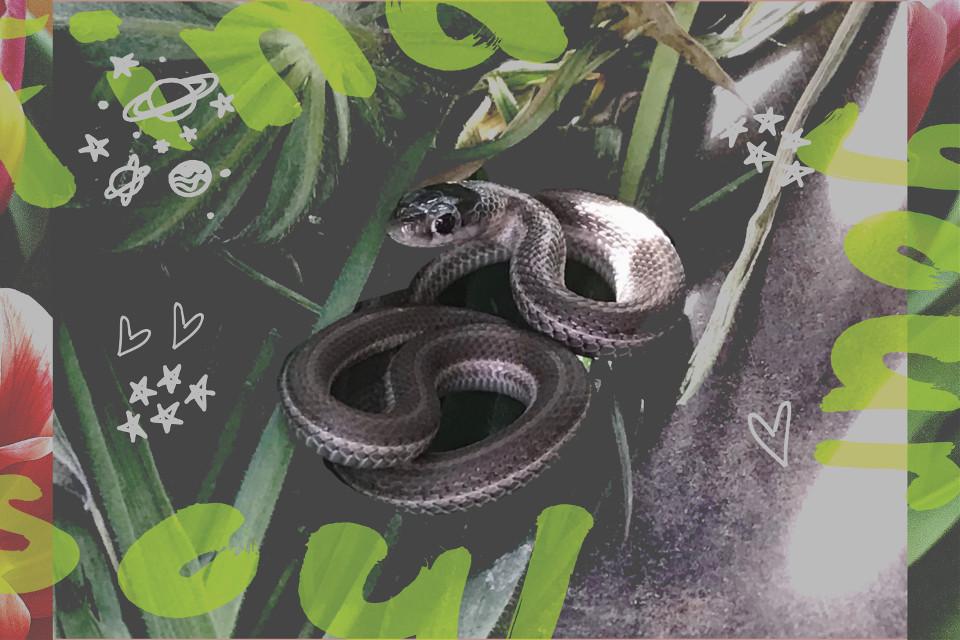 #freetoedit #babysnake #baby #snake #gartersnake #babygartersnake
