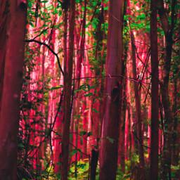 freetoedit forest nature naturephotography photography