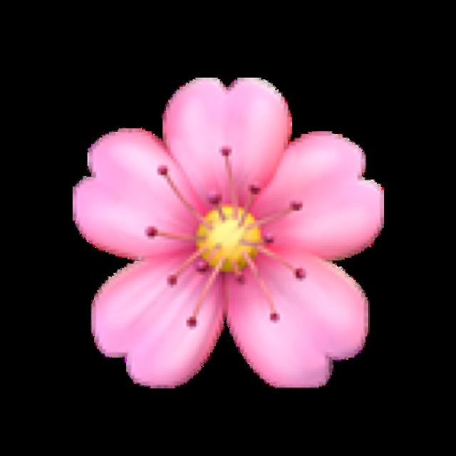 #flower #iphone #iphoneemoji #floweremoji #emoji #pink #pinkflower #freetoedit #floweremojiiphone