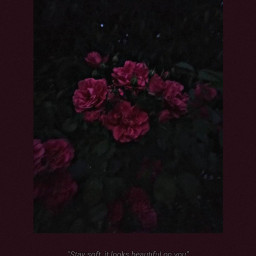 freetoedit aestetich redaesthetic red rose