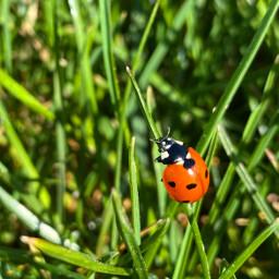 spring springishere ladybug nature red freetoedit