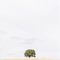 haveanicefriday nature countryside flatland tree freetoedit
