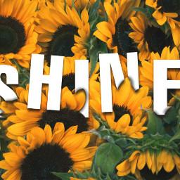 freetoedit sunflower colorful shine text