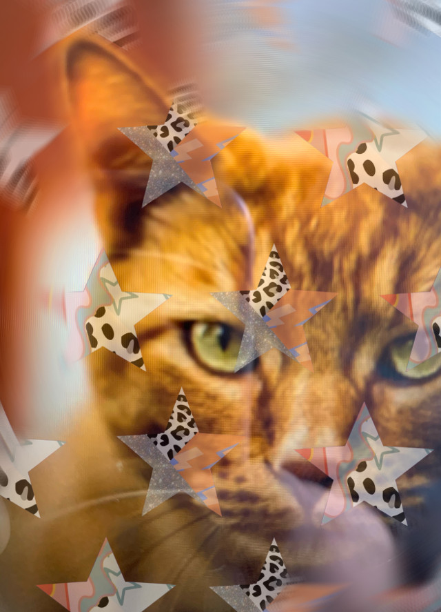 #kittys #freetoedit