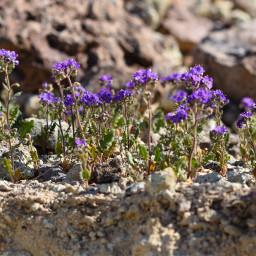 spring wildflowers freetoedit