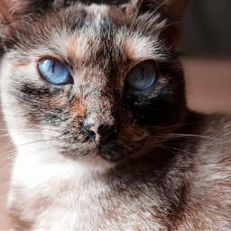 cats cat catsphotography catsofpicsart pets freetoedit pcpicsartpets picsartpets createfromhome stayinspired