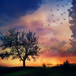 freetoedit landscape tree birds myedit