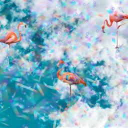 freetoedit flimingos pink sky