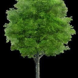 tree green brown japan birthday freetoedit