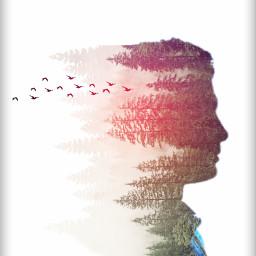 freetoedit silhouette trees birds doubleexposure ircsilhouette createfromhome stayinspired