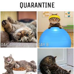 freetoedit cat meme catmeme funny