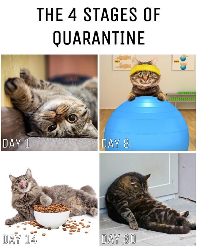 #freetoedit #cat #meme #catmeme #funny #quarantine #stayhome