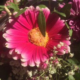 flowers freetoedit pcflowersnearyou flowersnearyou