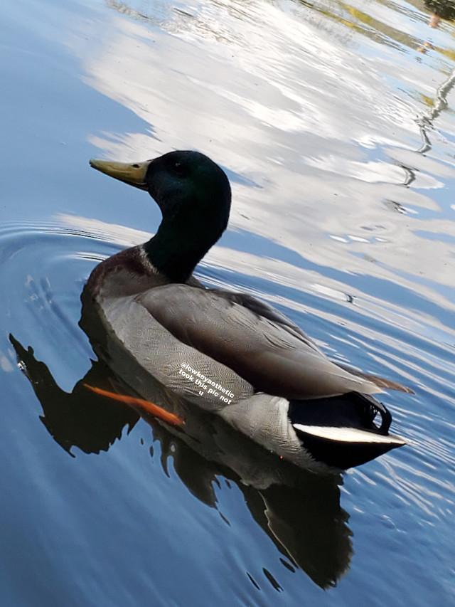 🥺 🦆 #madebylowkeyathestic #duck #pound