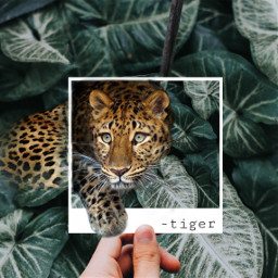 freetoedit tiger plants greenforestremix animal ecdreamdestinations dreamdestinations