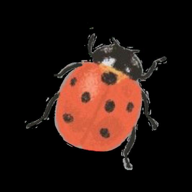 #ladybug #bug #vintage #retro #redaesthetic #aesthetic #red #freetoedit
