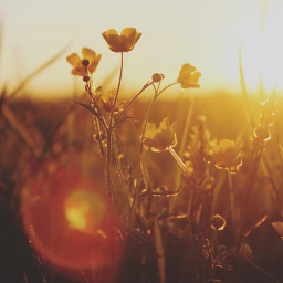 nature countryside wildflowers againstthelight sunlight freetoedit