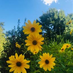 pcflowersnearyou flowersnearyou