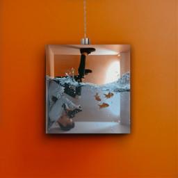minimalist aquaruim fishtank photography orange freetoedit