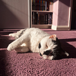 cat sunny sleepy