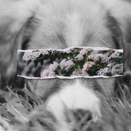 freetoedit floralpaper dog madewithpicsart picsart
