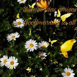freetoedit myfot myedit flowers butterfly