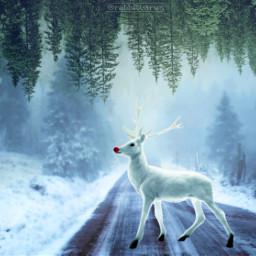 deer snow white trees pine freetoedit