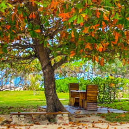 autumn fall leaves colors perfectday scenery freetoedit