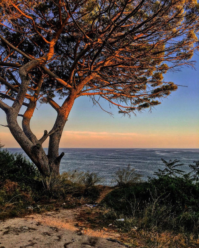 Good morning world 🌞                                                                                Wishes of a very nice weekend ✌🏼 #nature #sunrise #coastline #cliffside #seaview #pinetree #wildplants #seaview #horizon #skyandclouds #sunriselight #naturephotography   #freetoedit